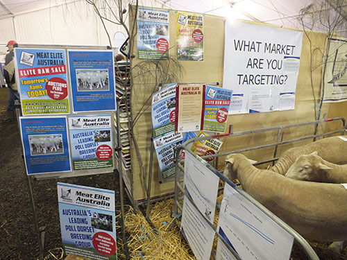 /edit/images/2013_SHEEPVENTION_-_MEAT_ELITE_AUSTRALIA.JPG